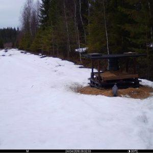 Spromise 3G riistakameran lähettämä kuva