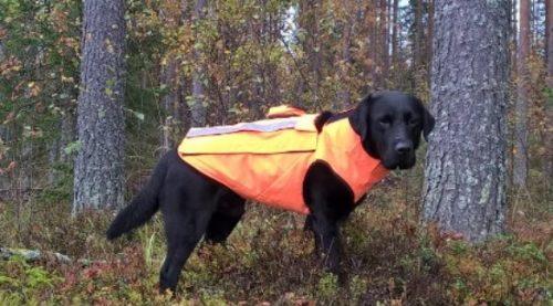 Ultrakevyt Kevlar® koiraliivi XL koko