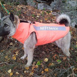 Turvaliivi NITEforce koiraliivi